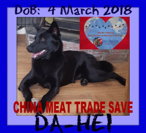 DA-HEI - CHINA SAVE