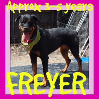 FREYER-AR - $250 reduced adoption