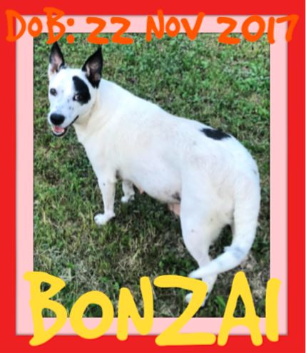 BONZAI - application being processed