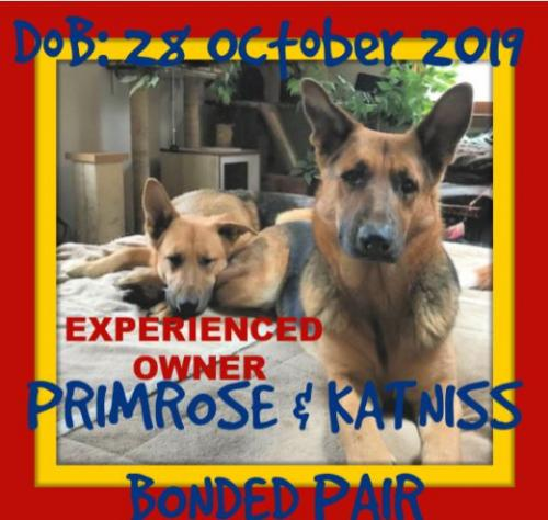 KATNISS - bonded with PRIMROSE- ON HOLD