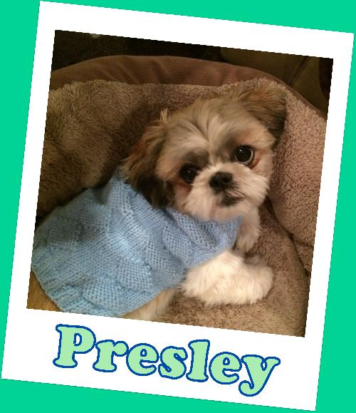 Presley (ADOPTION PENDING)