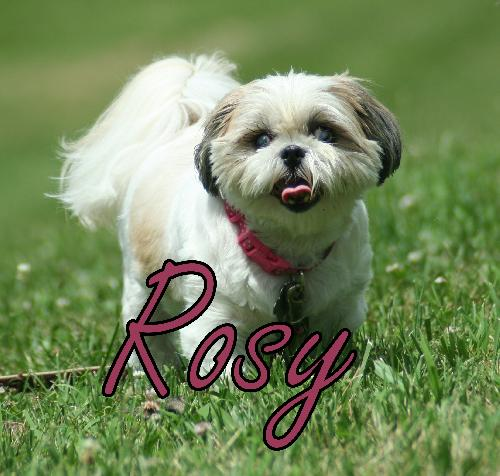 Rosy Anderson (ADOPTION PENDING)