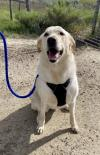 adoptable Dog in MT named Ripley C