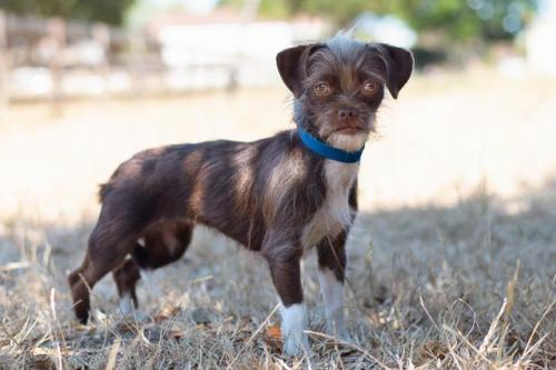 adopt LILY*