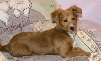 Quincy-ADOPTED!!