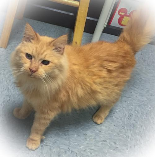 Ulysses-adopted