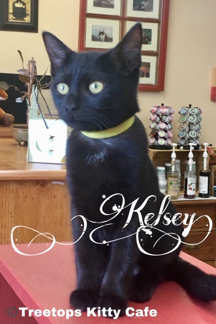 Kelsey - adopted