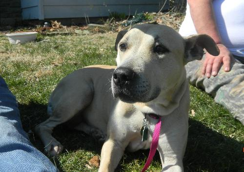Lacey-ADOPTED!!