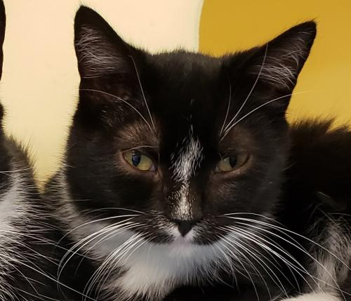 Missy 2019 (must be adopted w/Clem)