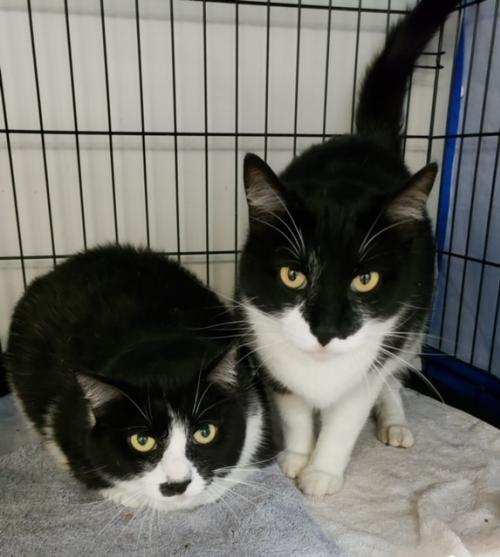 Smudge (together w/ his bonded sister Smidge)