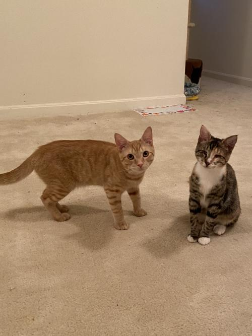 Apollo & Diana (special needs bonded siblings)