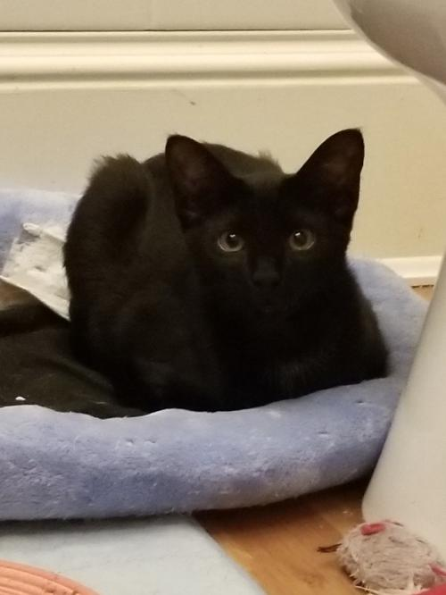 Charcoal (must be adopted w/Brandi)