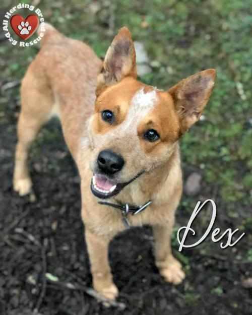 Dex (Tennessee)