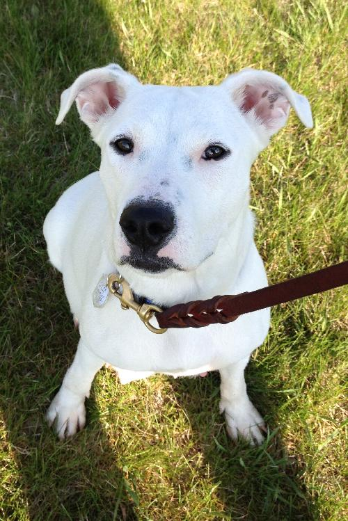Pearl - Needs Foster