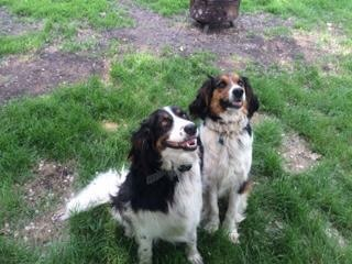 Bella and Bowser - Need Foster