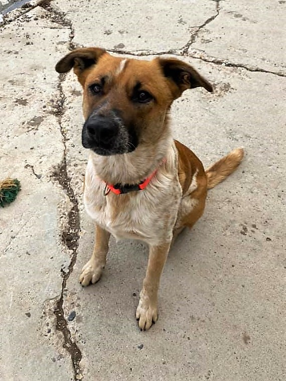 adoptable Dog in Diamondville, WY named Ruger