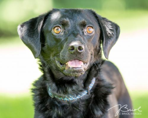 Adoptable Dogs - MN Animal Rescue - Wags & Whiskers Animal Rescue