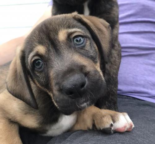 Adoptable Dogs - MN Animal Rescue - Wags & Whiskers Animal