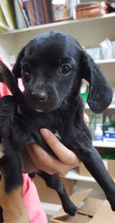 Jello Dachshund Terrier Mix Puppy S Web Page
