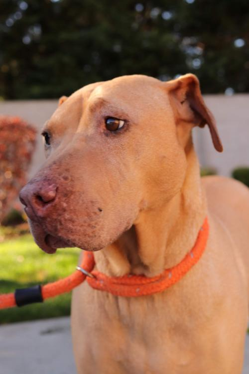 Halo - Beautiful Lady Ready to Love You