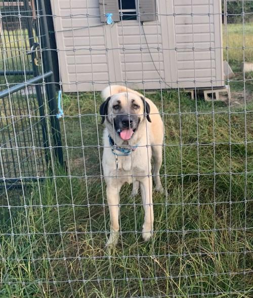 TEXAS, FORT WORTH **FOSTER OR ADOPT ASAP**