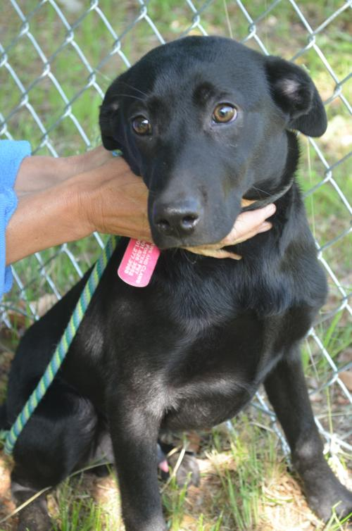 Dog Rescue Groups In Nh