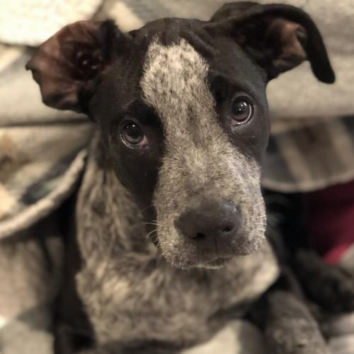 Available Dogs | Save-a-Bull Rescue