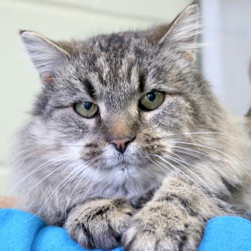 Cats For Adoption In Madison Wi