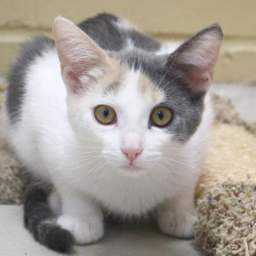 Adoptable Cats — Humane Society of Jefferson County, Wisconsin