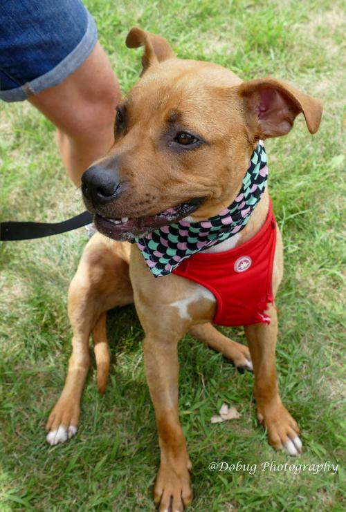 Hoof Woof & Meow Animal Rescue Available for Adoption - Hoof