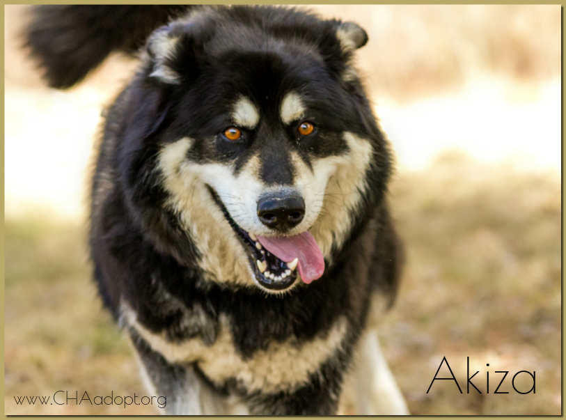 Dog Rescue Groups In Northern California