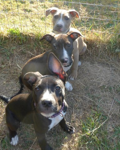 The Puppies - Emma-Boots-Roxanna