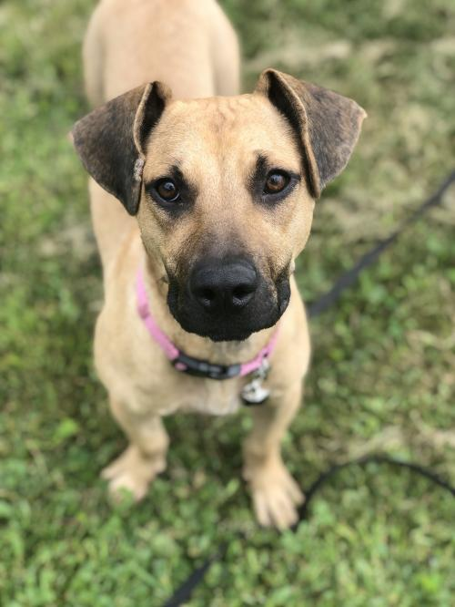Adoptable Pets - Twin Cities Pet Rescue