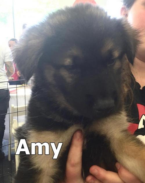 Large image of Amy
