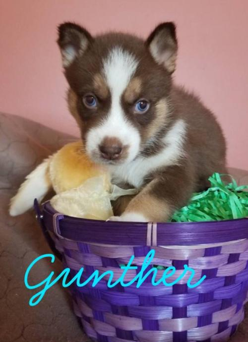 Large image of Gunther