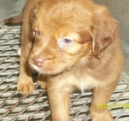Large image of Bailey-Adopt Pend