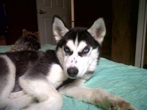 Large image of Lexi-Adopt Pend