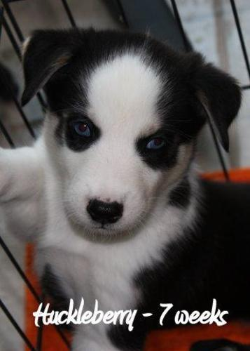 Large image of Huckleberry-Adopt Pend