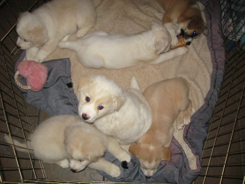 Large image of Fluffy Puppies