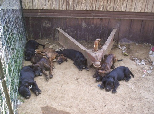 Large image of Puppies!