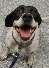 adoptable Dog in ID named Smiley
