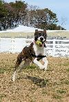 Off Site Foster 1206-0861-Angelo