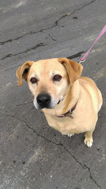 Rescue Macey