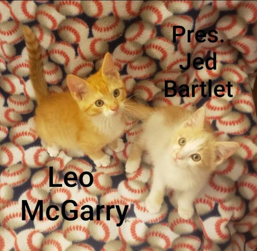 Jed Bartlet and Leo McGarry  Domestic Short Hair (short coat) Male