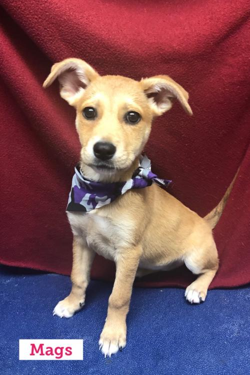 Adoptable Dogs and Puppies - Diane's Discount Pet Supplies