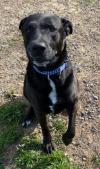 adoptable Dog in , WV named Buddy
