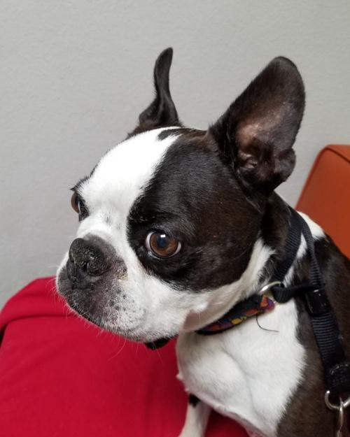 give rescue pets a second chance by donating to boston buddies inc