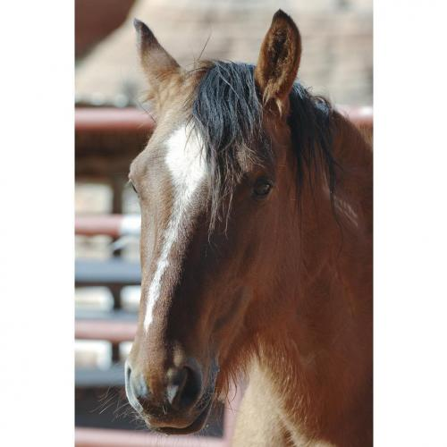 Adoptable Male Horse