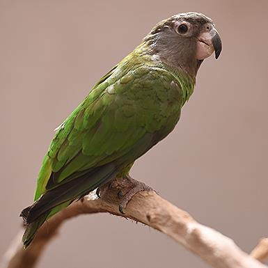 Adoptable Parrot Other