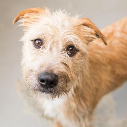 Adoptable Male Terrier / Hound / Mixed